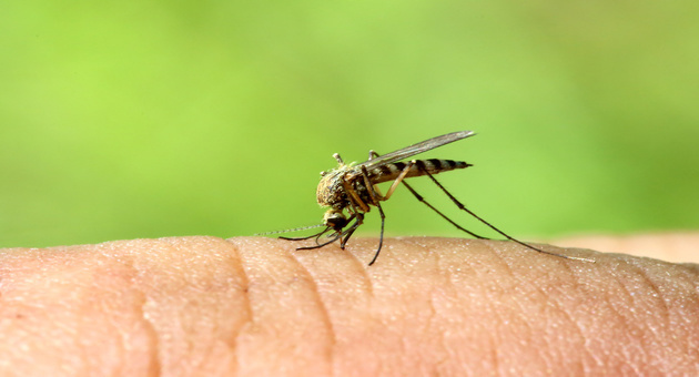 Dengue Fever : Don't Panic Instead Prepare Yourself For It!