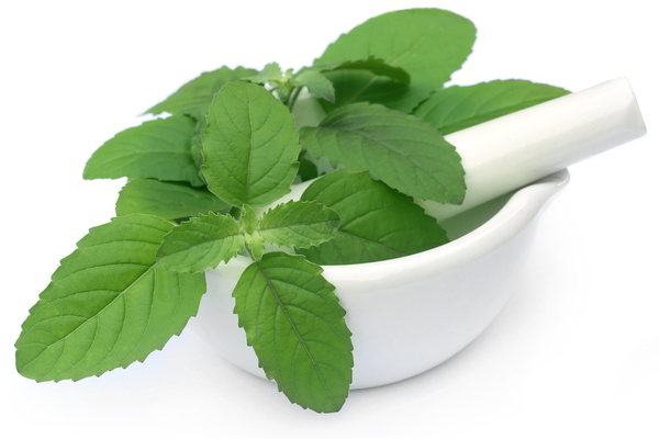 Tulsi- home remedy for Malaria