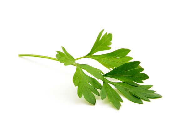parsley for gum pain